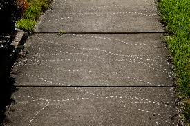 snail tracks 2